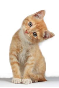kittencutout